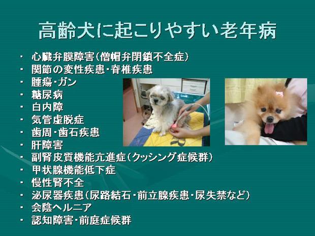9.高齢犬に起こりやすい老年病
