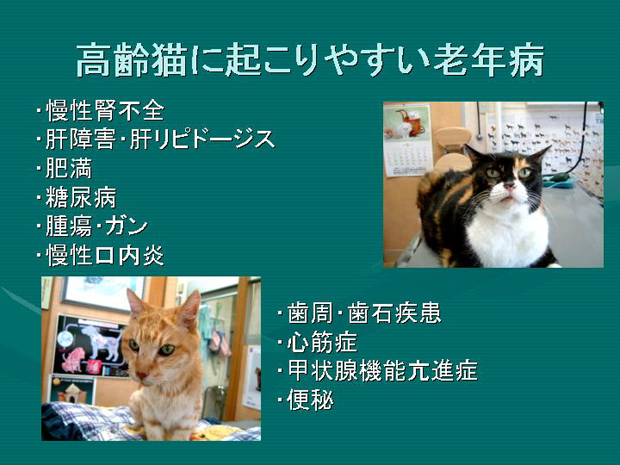10.高齢猫に起こりやすい老年病