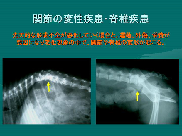 14.関節の変性疾患・脊椎疾患