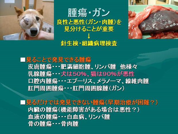 18.腫瘍・ガン