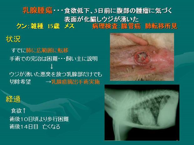 21.乳腺腫瘍 雑種犬 クン