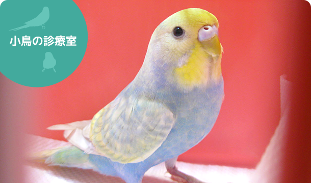 小鳥の診療室