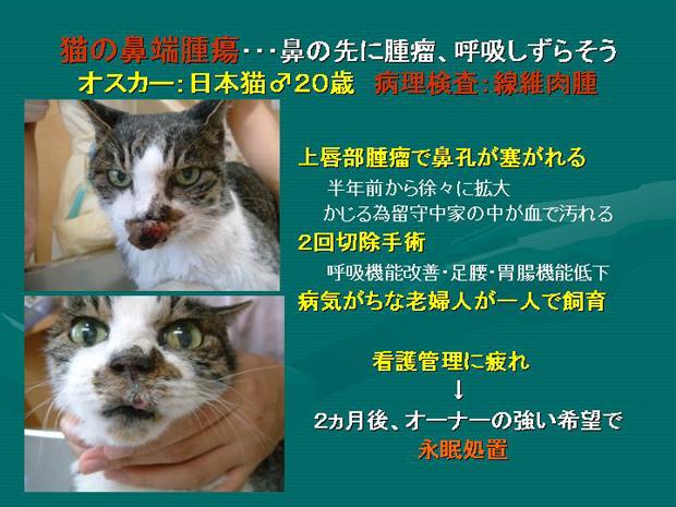 27.猫の鼻端腫瘍