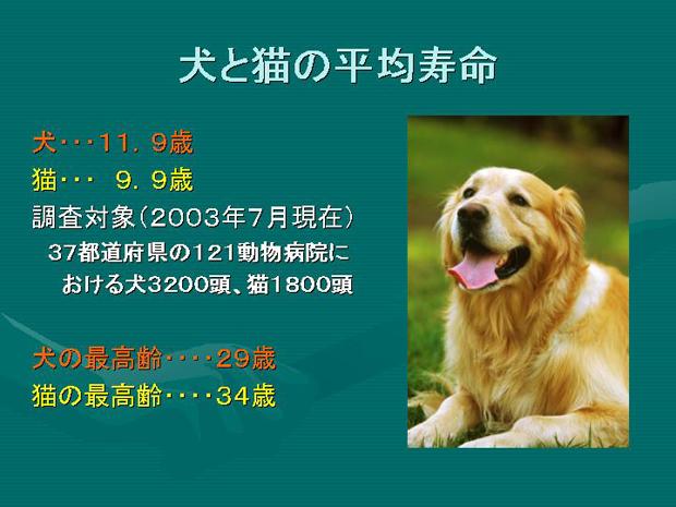 7.犬と猫の平均寿命